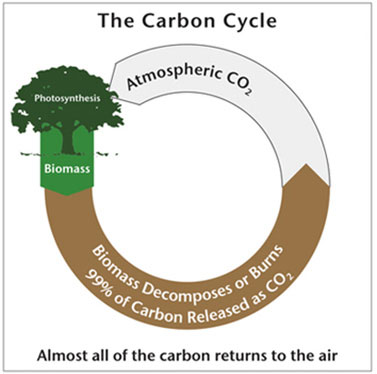 CarbonCycle_374